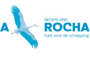 1_nl_rgb_b